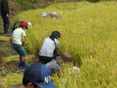【最新情報】自主事業 R-1「ファミリーふるさと農業体験(稲刈り)」中止のおしらせ